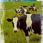 Cow On Farm Version - 4 Art Print