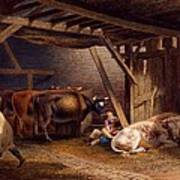 Cow Shed Print by Robert Hills