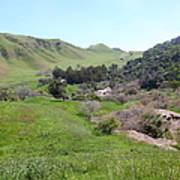 Cows Along The Rolling Hills Landscape Of The Black Diamond Mines In Antioch California 5d22294 Art Print