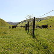 Cows Along The Rolling Hills Landscape Of The Black Diamond Mines In Antioch California 5d22339 Art Print by Wingsdomain Art and Photography
