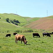 Cows Along The Rolling Hills Landscape Of The Black Diamond Mines In Antioch California 5d22355 Art Print
