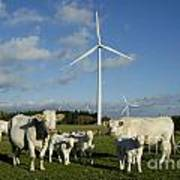 Cows And Windturbines Art Print