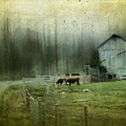 Cows By The Road Art Print by Kathy Jennings