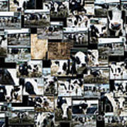 Cows Collage Art Print