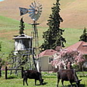 Cows Home On The Ranch At The Black Diamond Mines In Antioch California 5d22354 Print by Wingsdomain Art and Photography