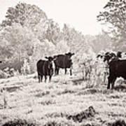 Cows Art Print by Karen Broemmelsick