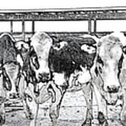 Cows Pencil Sketch Art Print