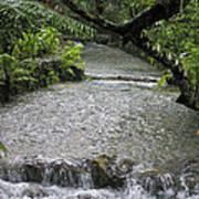 Coyaba River Gardens 6 Art Print