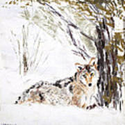Coyote In The Snow Art Print