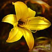 Cozy Yellow Daylily Art Print