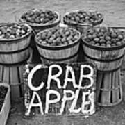 Crab Apples Art Print
