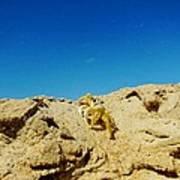 Crab Climb Blowing Sand 8/24 Art Print
