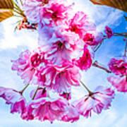 Crabapple Impressions Art Print