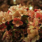 Crabapple In Bloom Art Print