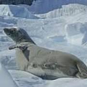 Crabeater Seal On An Iceberg Art Print