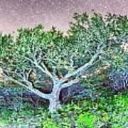 Craggy Gardens North Carolina Blue Ridge Parkway Autumn Nc Sceni Art Print