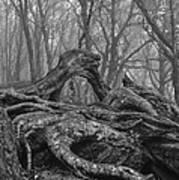 Craggy Roots Art Print