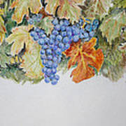 Cran-grapes Art Print