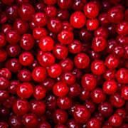 Cranberries - 1 Art Print