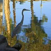 Crane Standing Still Art Print