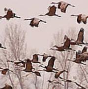 Cranes Across The Sky Art Print by Don Schwartz