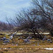 Cranes And Mixed Ducks Art Print