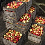 Crated Apples Art Print