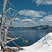 Crater Lake Tree Art Print