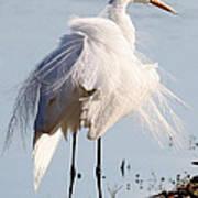 Crazy Egret Feathers Art Print