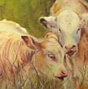Cream And Sugar, Cows  Art Print