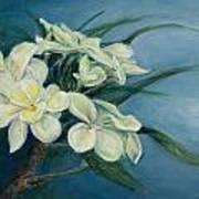 Creamy Plumeria Art Print