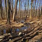 Creek At Woodland Park Art Print