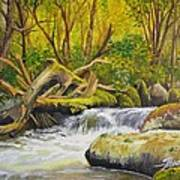 Creek In The Forest Art Print