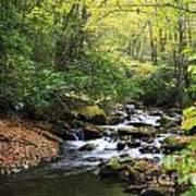 Creek In The Woods Art Print