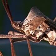 Creepy Bug Art Print