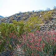 Creosote And Chuparosa On Henderson Trail In Santa Rosa-san Jacinto Nmon-ca Art Print