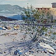 Creosote Bush Art Print