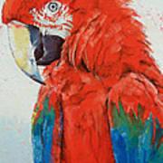 Crimson Macaw Art Print
