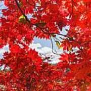 Crimson Red Leaves Background Art Print