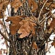 Crispy Leaves Art Print