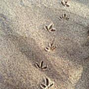 Critter Tracks In The Sand Art Print
