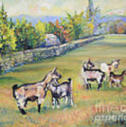 Croatian Goats Art Print