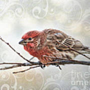 Croching Finch Art Print