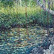 Crocodile Creek Art Print