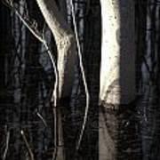 Crooked Stick Art Print