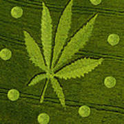 Crop Circles Art Print