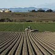 Crops In San Luis Obispo County Art Print