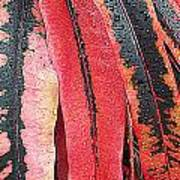 Crotans With Dew Art Print