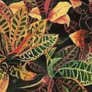 Croton Leaves Art Print