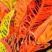 Croton's Many Colors Art Print